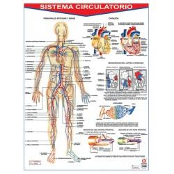POSTER SISTEMA CIRCULATORIO C/B