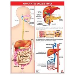 POSTER APARATO DIGESTIVO C/B