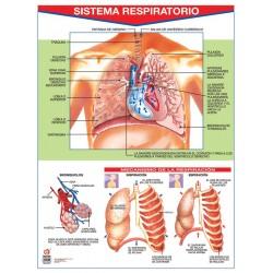 POSTER SISTEMA RESPIRATORIO C/B