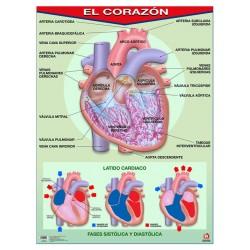 POSTER EL CORAZON C/B