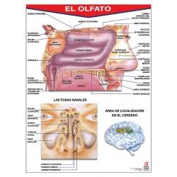 POSTER EL OLFATO C/B