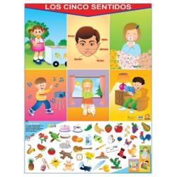 POSTER LOS CINCO SENTIDOS C/B