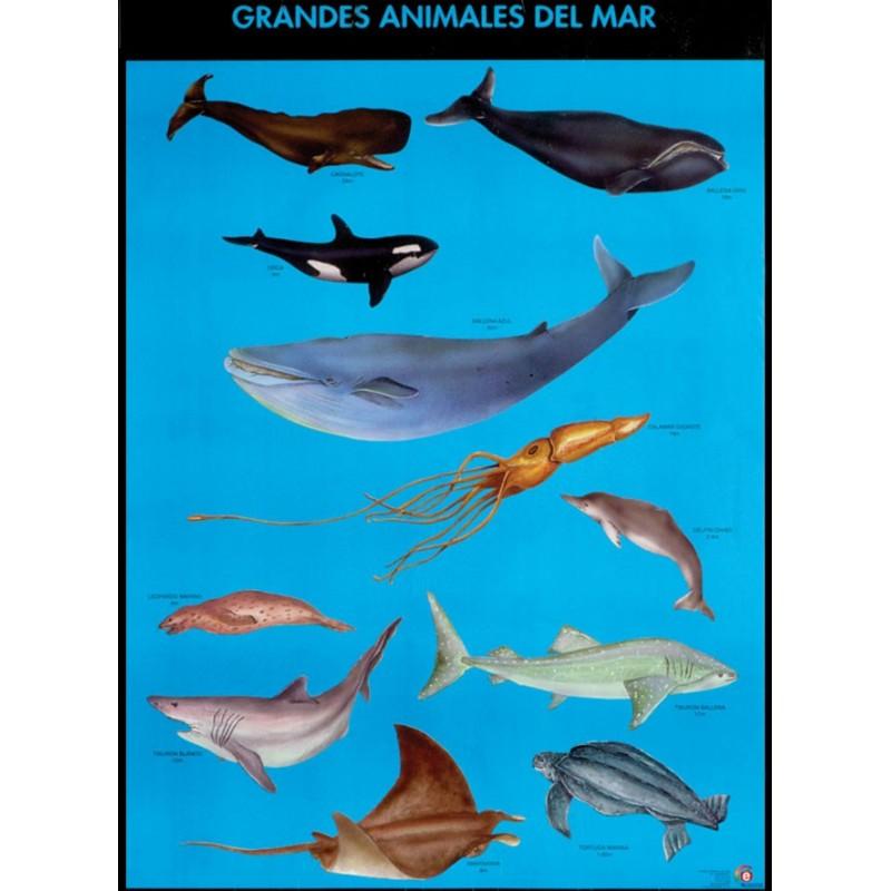 Poster grandes animales del mar educatodonayarit for Poster de pared grandes